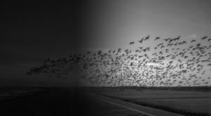 hundreds of birds flying in the sky